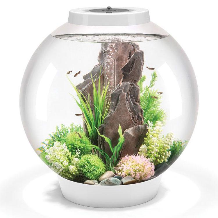 можно виды аквариумов для дома фото актер театра